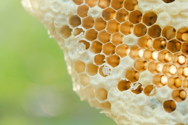 Macro of honeycomb, background hexagon texture Premium Photo