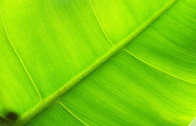マクロ画像は水滴で葉の後ろのテクスチャを閉じました Premium写真