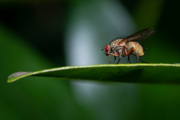 Макрос мухи на зеленом листе Бесплатные Фотографии