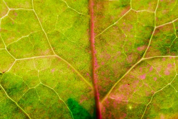Макрос зеленого листа Бесплатные Фотографии