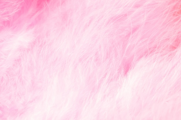 Macro of pastel bird fluffy feathers in soft color Premium Photo
