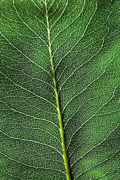Макро фото темно-зеленый естественный фон с листом с рисунком прожилок. макет листвы. квартира Premium Фотографии