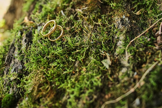 Macro photograph of wedding and engagement rings sitting on top of moss Premium Photo