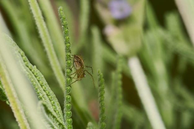 La fotografia macro di un ragno su una pianta fiorita Foto Gratuite
