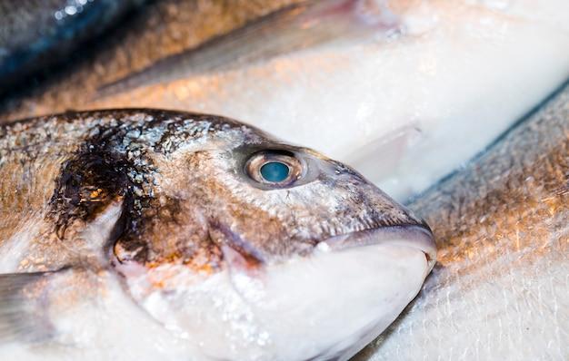 Macro shot of fresh fish Free Photo
