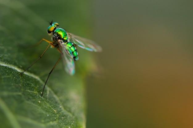 緑の家のマクロショットは、森林の中で飛ぶ Premium写真