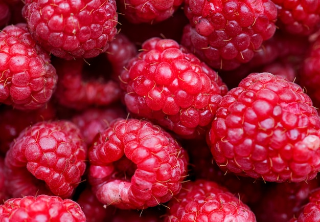 Macro shot of red raspberry background Free Photo