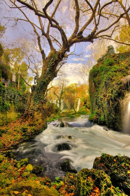 Magical forest with a river Free Photo