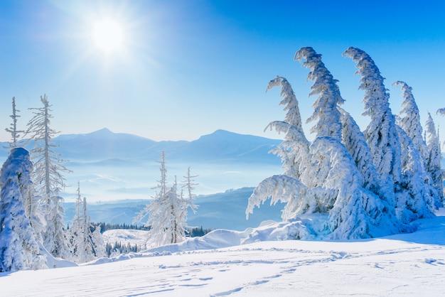 Magical winter snow covered tree Premium Photo