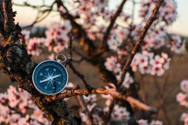 A magnetic compass in a blooming tree against. Premium Photo