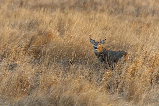 Великолепный олень стоит посреди покрытого травой поля Бесплатные Фотографии