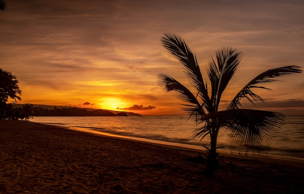 Magnificent scenery of a beach with trees and a sea during the sunset Free Photo