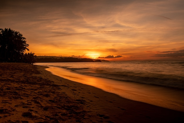 日没時の木々と海のあるビーチの壮大な風景 無料写真