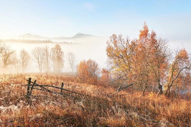 霧の森の秋の木々と雄大な風景。カルパティア、ウクライナ、ヨーロッパ。美容の世界。 Premium写真