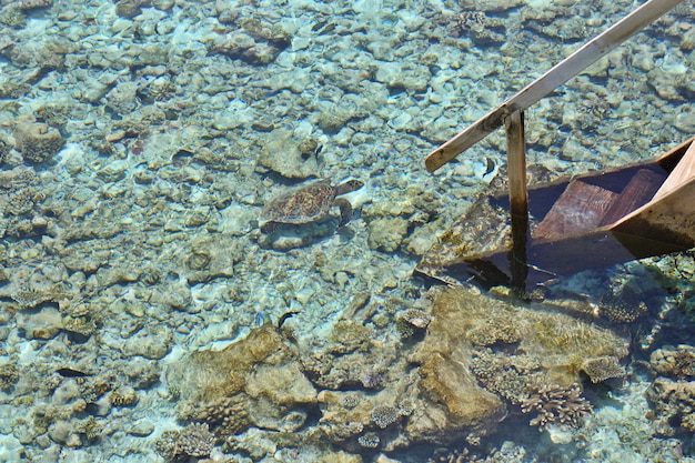 Maldives corals house for sea turtle and fishes, top view from water villa with wooden stair, blurred focus. Premium Photo