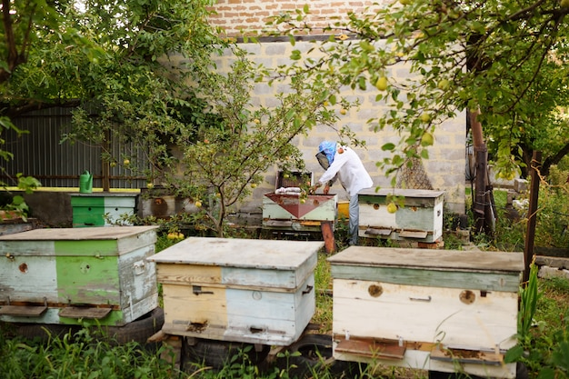 A male bee-keeper takes out of the beehive or apiary the frame for bees Premium Photo