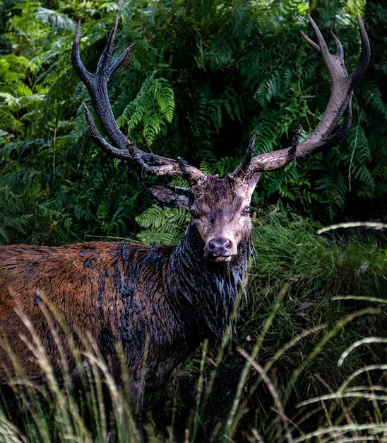 Самец лося в окружении травы и деревьев в дневное время Бесплатные Фотографии
