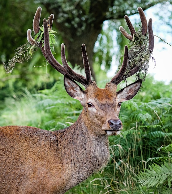 Male elk surrounded by grass and trees Free Photo
