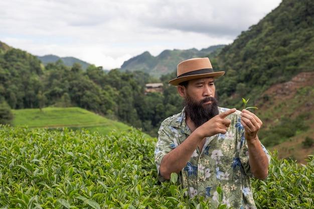 A male farmer with a beard check the tea on the farm. Free Photo