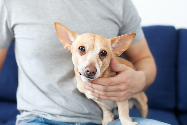 Where to Get Pet Insurance