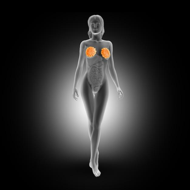 フルボディの女性のmamary腺 無料写真