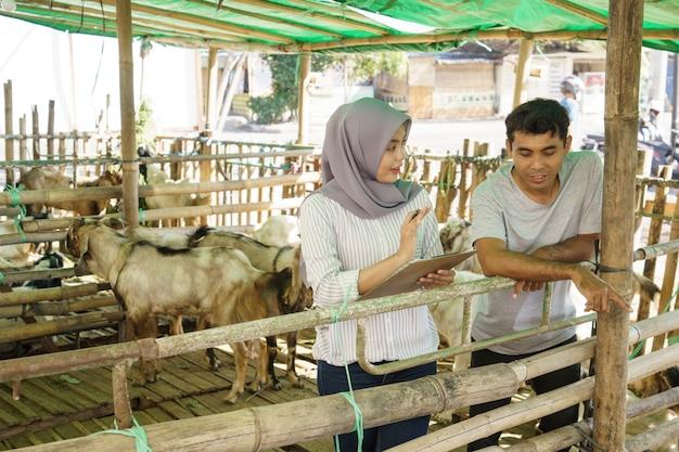 Мужчина и женщина-фермер на своей ферме вместе проверяют здоровье животных Premium Фотографии