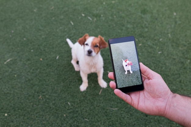 Man hand with mobile smart phone taking a photo of a cute small dog over green grass Premium Photo