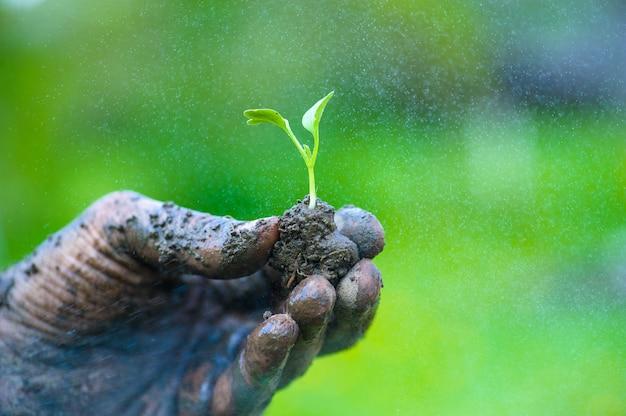 緑の若い植物を抱きかかえた Premium写真