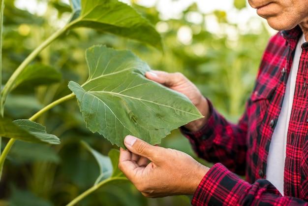 Man holding a leaf close up Free Photo