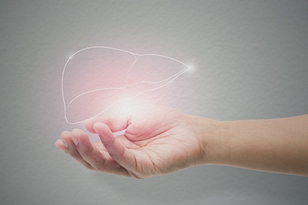 Man holding liver illustration against gray wall background. Premium Photo