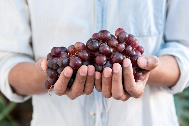 Man holding red grapes in hands Free Photo