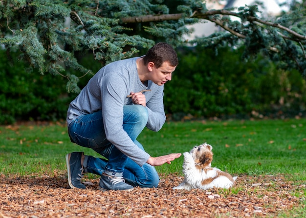 Man playing with shih tzu puppy outdoors, dog training in the park ...