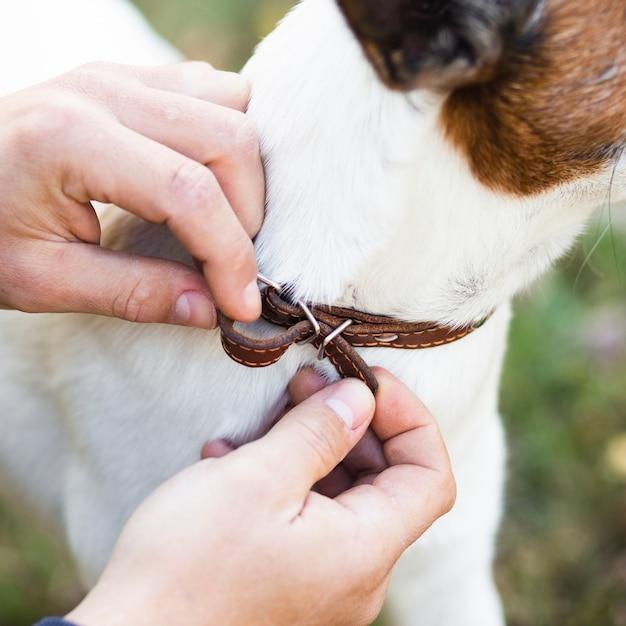 Человек надевает ошейник на собаку Бесплатные Фотографии