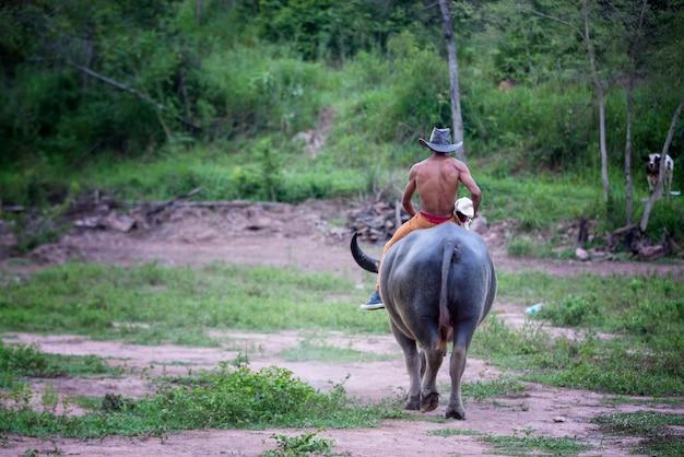 タイの田舎でバッファローに乗る男 Premium写真