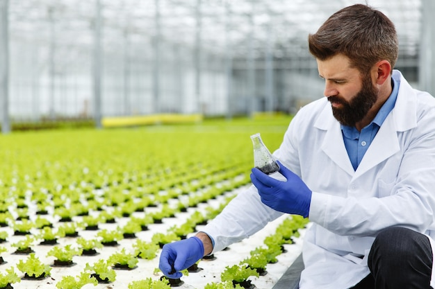 Man takes a probe of greenery in an erlenmeyer flask standing in the greenhouse Free Photo