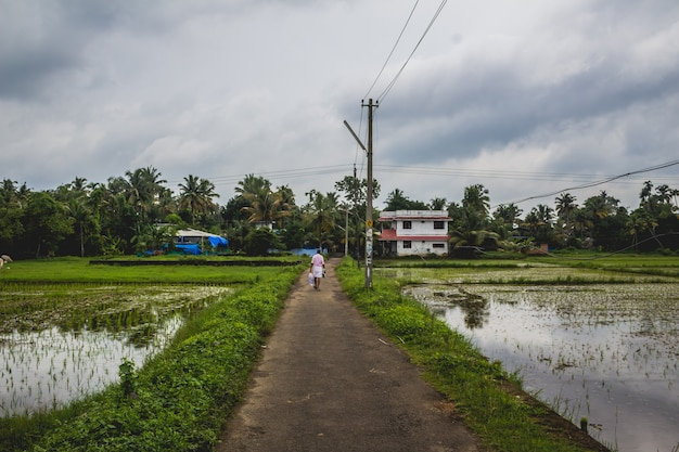 Man walking along a long road back to his home with rice fields on both sides Free Photo