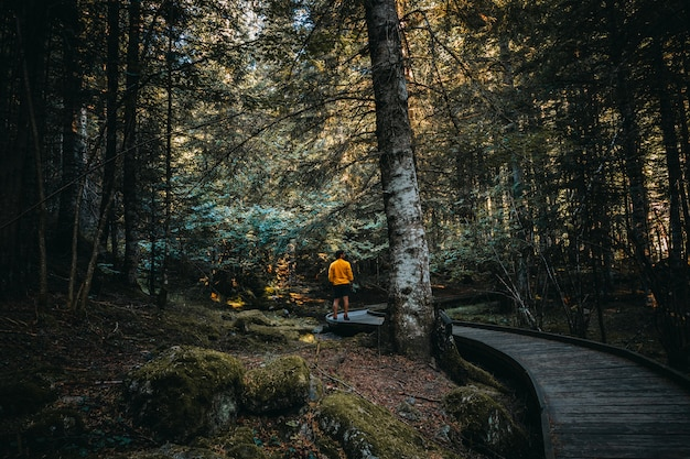 Man walking through which interior of a forest Premium Photo