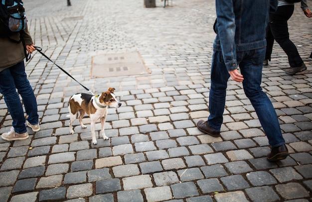 Человек гуляет с собакой в центре города. одинокая собака с красивыми глазами смотрит на прохожих на площади в германии Premium Фотографии