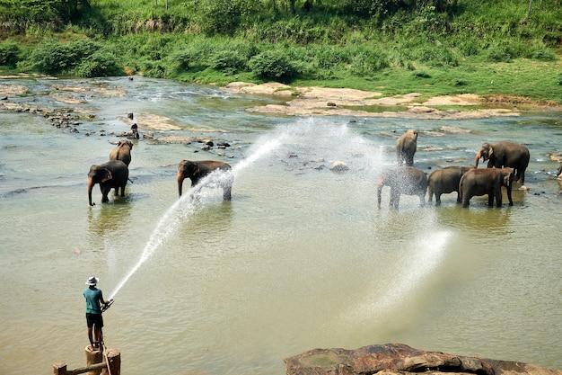 アジアの島の川で象を洗う男 Premium写真