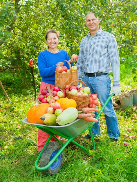 Man and woman  with  harvest  in  vegetables garden Free Photo