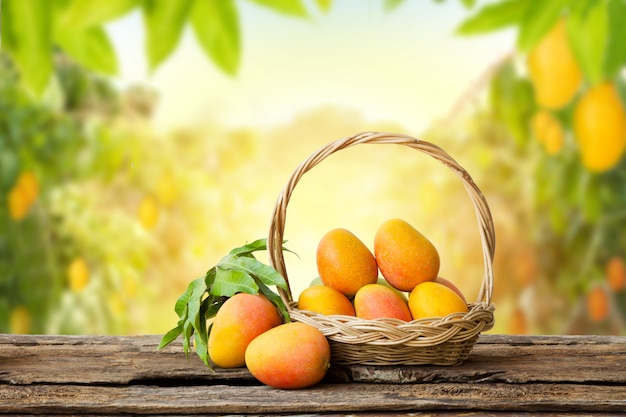 Mango tropical fruit in basket on wooden table with farm background Premium Photo