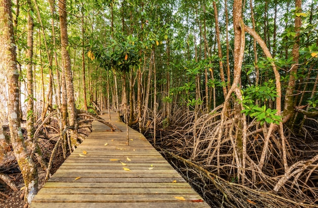 Mangrove forest and the morning light Premium Photo