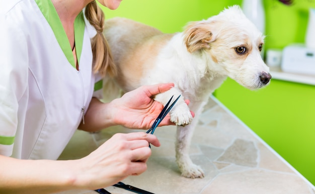Manicure for dog in pet grooming salon Premium Photo
