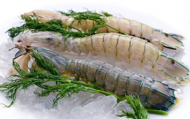 Mantis shrimp on ice with herbs Premium Photo