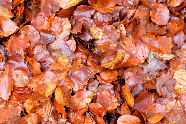 Many brown wet leaves together for wallpaper Premium Photo