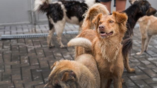 Molti simpatici cani da salvataggio al rifugio in attesa di essere adottati Foto Gratuite