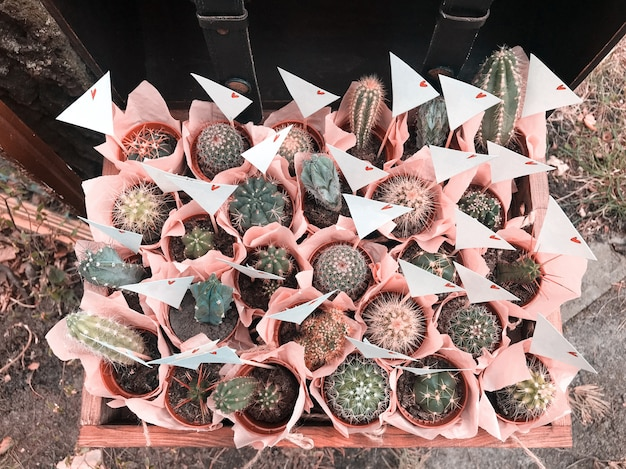 Many different small cactus in a beautiful pink wrappers in a wooden box rustic style Premium Photo