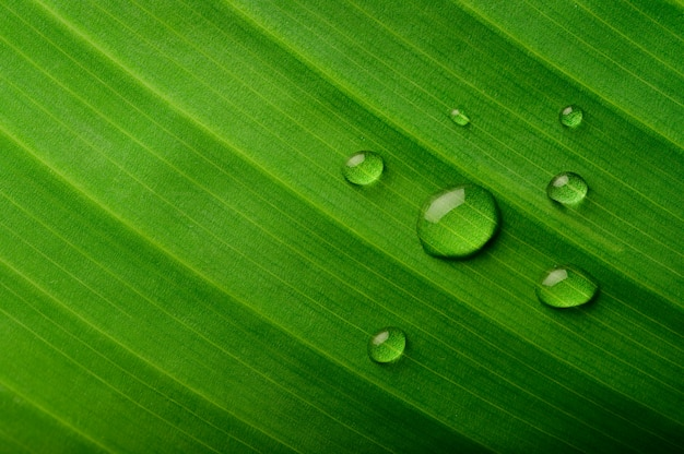 Many drops of water drop on banana leaves Free Photo