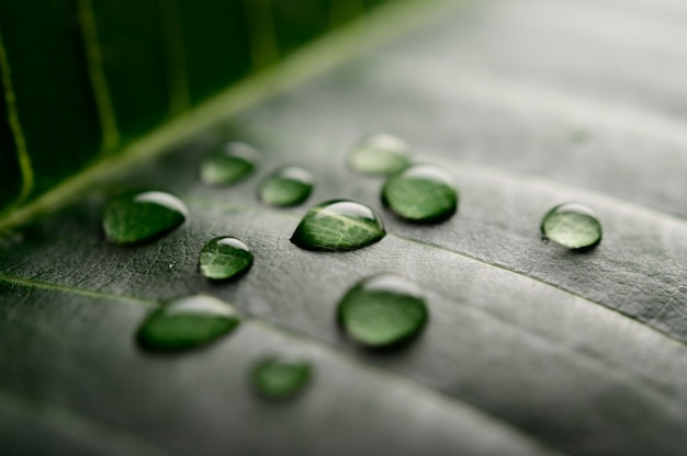 Many drops of water falling on the leaves Free Photo