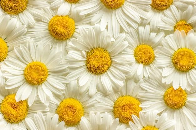 Many field flowers chamomile daisies close up Premium Photo